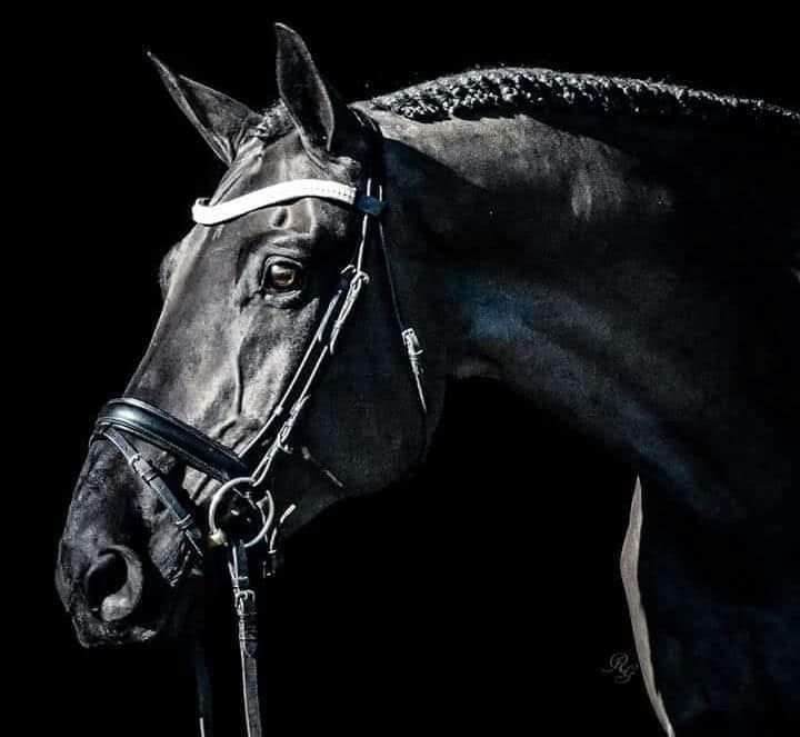 Photo Challenge 22 Horses On Black Backgrounds And One On A White Background Horse Nation