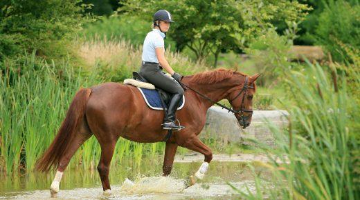 Rein Lame: A Rider Problem