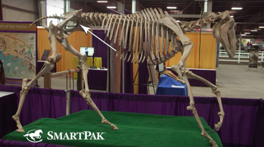 SmartPak Monday Morning Feed: Ask the Vet, August Edition