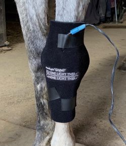 """Weekend Wellness: According to """"Gospel"""" Equine Light Therapy Product Review"""