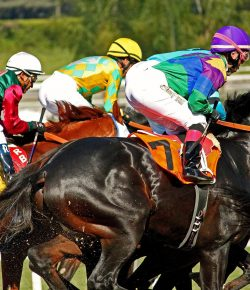 Thoroughbred Racing Industry Reaches a Pivotal Moment