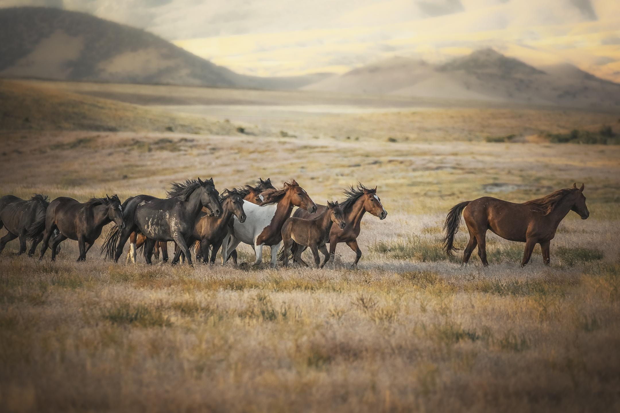 behold freedom  wild mustangs of onaqui mountains