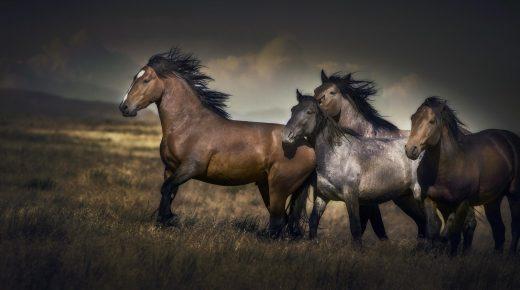 Wild Horse Haiku