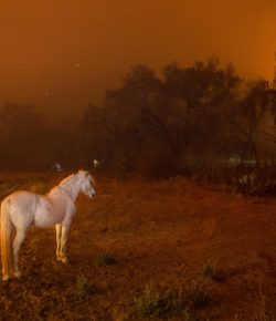 Weekend Wellness: Protecting Your Horse During a Disaster