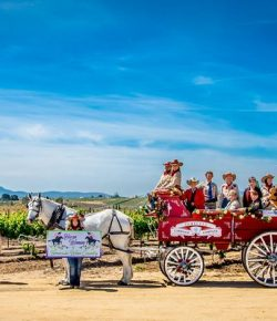 The Power of Hope: The Horsewomen of Temecula Wine Country in the 2020 Rose Parade