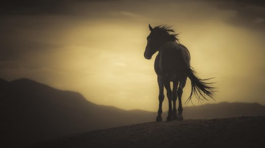 The Wild Mustangs of Onaqui Mountains: The Fate of the Mustangs