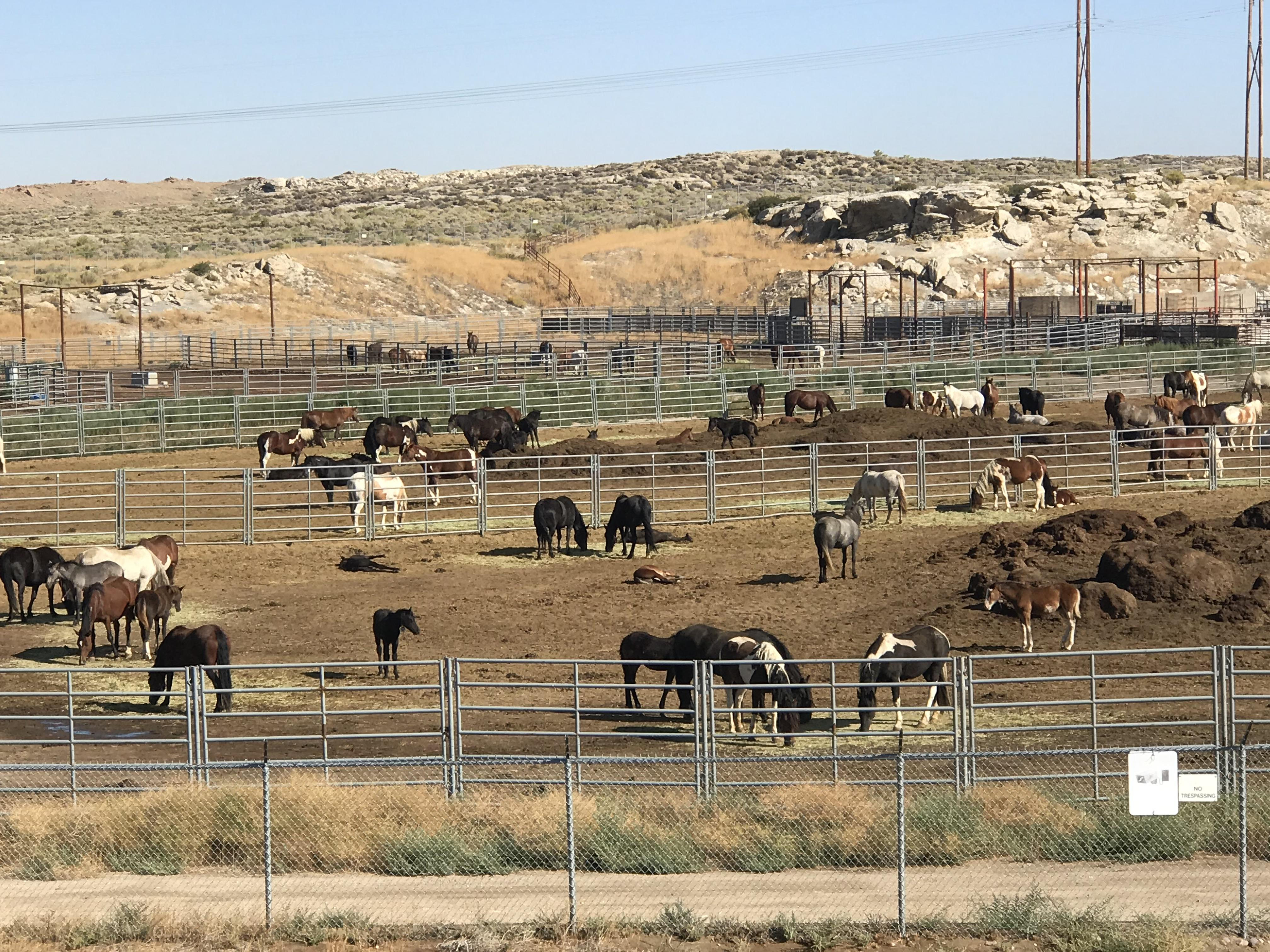 The Wild Mustangs Of Onaqui Mountains The Fate Of The Mustangs Horse Nation