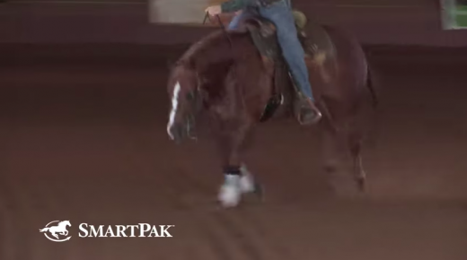 SmartPak Monday Morning Feed: Ask the Vet, October Edition