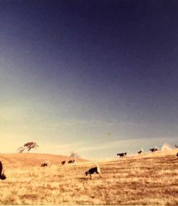 Photo Challenge: 14 Horses & Hounds