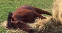 #TGIF,  by Flexible Fit Equestrian: Weekend Goals