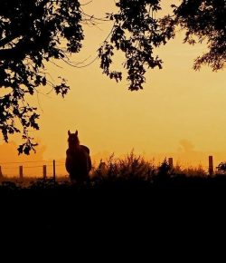Third Annual Horse Nation Halloween Short Story Contest