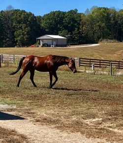 For the Love of the Horse: Casey & Alvie