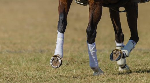 Weekend Wellness: Polo Wrapping Tutorial with Evention TV