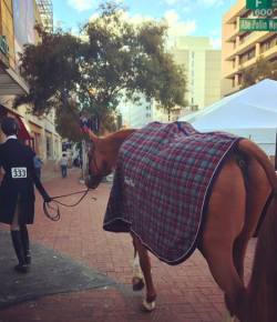 Best of JN: We Love WIHS, by Kentucky Performance Products