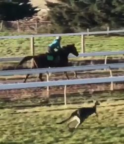 Tuesday Video: Australian Race Horse