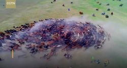 World Equestrian Brands Drone Cam: Running in Circles