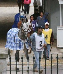 Kentucky Performance Products: Feeding Horses – Energy Sources Matter