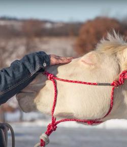 Veterans Day Video: Horses and Veterans