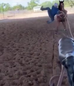 Tuesday Video: Roping Blooper