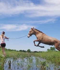 Reader Photo Challenge: 14 Readers Walking With Their Horses
