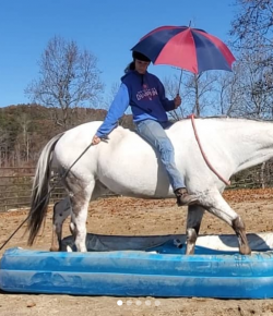 #NoStirrupNovember: 13 Riders Who Are Making the Rest of Us Look Bad, by Draper Therapies