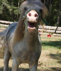 Reader Photo Challenge: 14 Surprised Horses