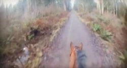 World Equestrian Brands Helmet Cam: Trail Canter