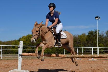 Who Says Mules Can't Jump?