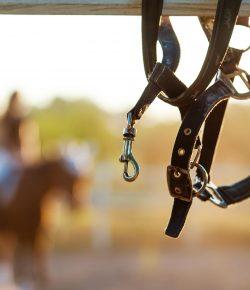 Barn Hacks for Broken Halters