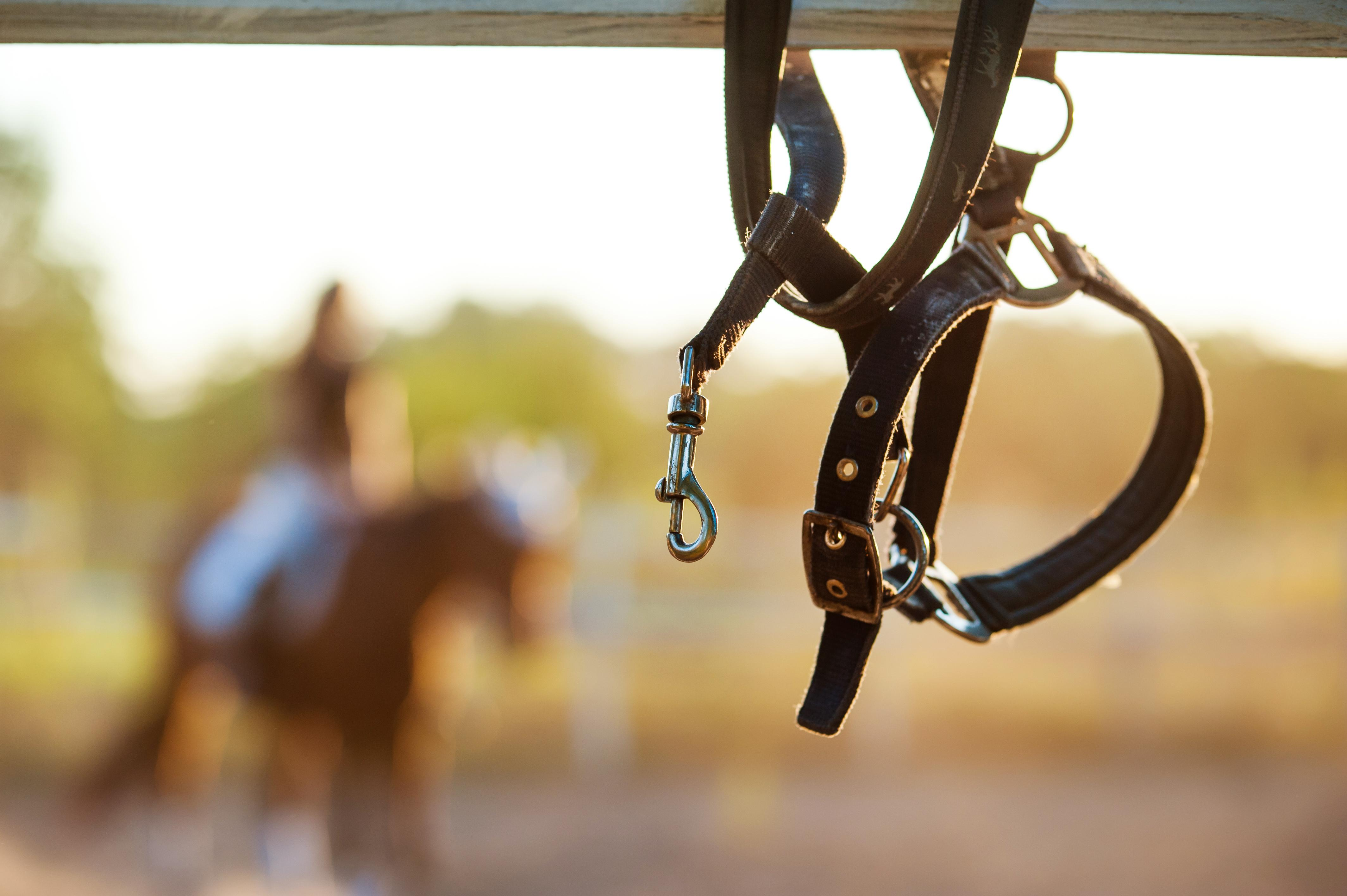 Barn Hacks For Broken Halters Horse Nation
