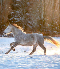 Reader Photo Challenge: 17 Horses in the Snow
