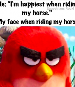 12 #EquestrianProblems According to Twitter… and Instagram