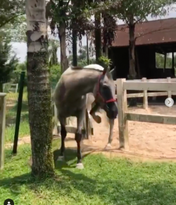 #TGIF, by Flexible Fit Equestrian: Equine Escape Artist