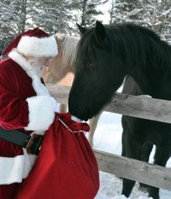 Reader Photo Challenge: 22 Horses Ready for the Holidays