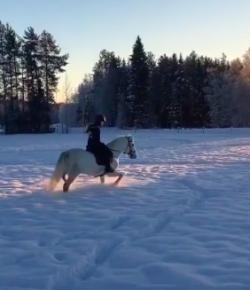 #TGIF, by Flexible Fit Equestrian USA: Dashing Through the Snow