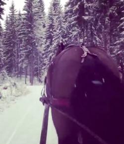 World Equestrian Brands Helmet Cam: One Horse Open Sleigh