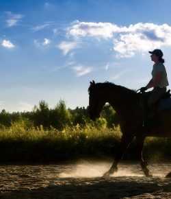 Laying Down the Law: Don't Leave Your Equine Career Vulnerable