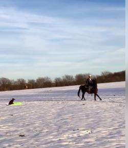 #TGIF, By Flexible Fit Equestrian USA: Going Sledding!