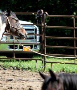 5 Keys to a Successful Partnership With Your Horse