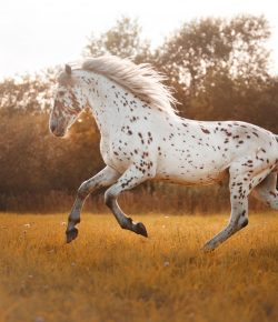 What Your Favorite Horse Breed Says About You