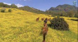 World Equestrian Brands Drone Cam: Cavalli