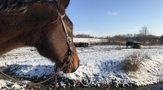 5 Reasons I Bought an Already-Restarted OTTB for My Next Horse