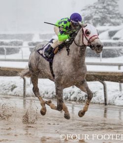 Photo Challenge: 11 Horses in a Winter Wonderland