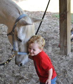 An Old Horse's Dream