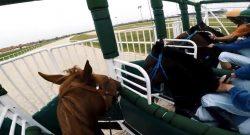 World Equestrian Brands Helmet Cam: Jockey Cam