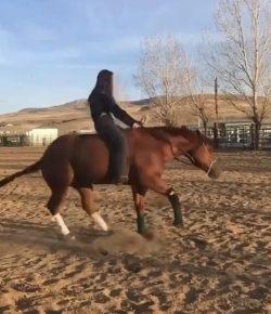 Tuesday Video: Bareback and Bridleless Reining