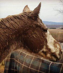 Photo Challenge: Eight Very Muddy Horses