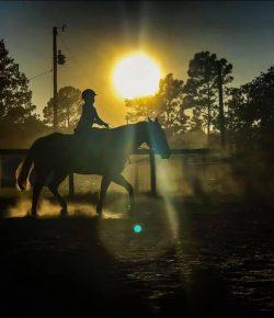 Photo Challenge: 23 Horses at Sunset