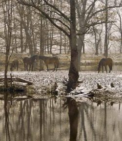 Kentucky Performance Products: Is Your Horse Getting Enough Water This Winter?