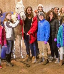 Standing Ovation by Ovation Riding: Equine Assisted Learning and Therapy With In Stable Hands